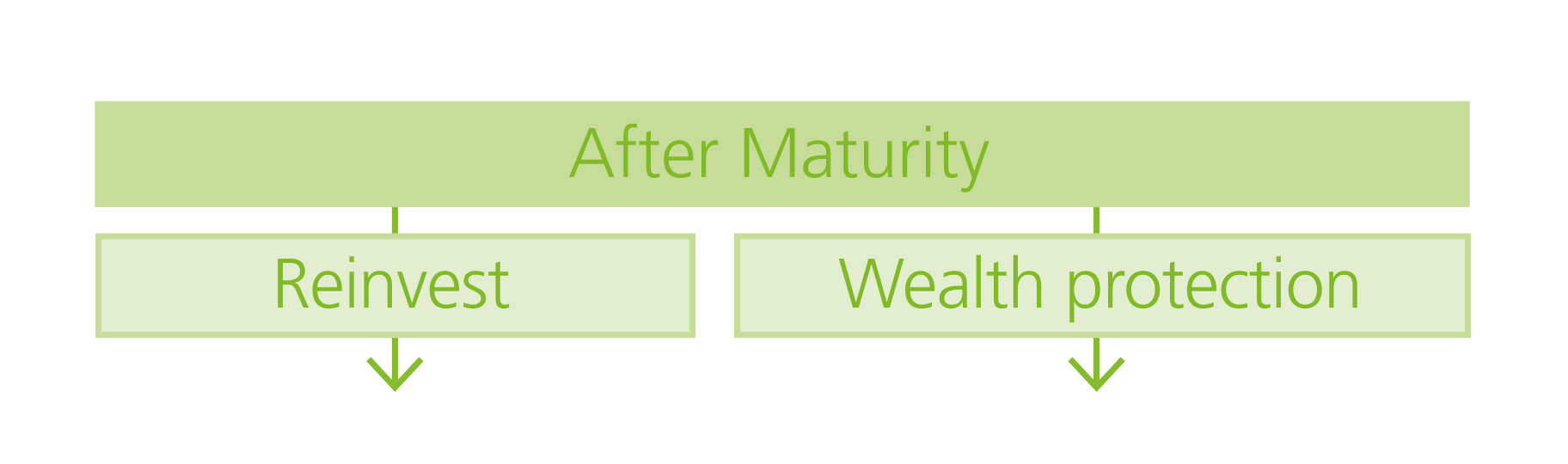 After-Maturity-graphic_White-background-(2).png